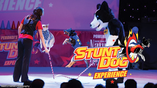 chris-perondis-stunt-dog-experience